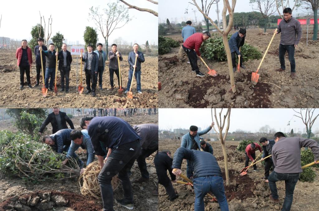 无锡市审计局积极开展义务植树活动
